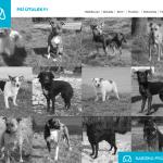 WebDesign – Útulek Ostrava